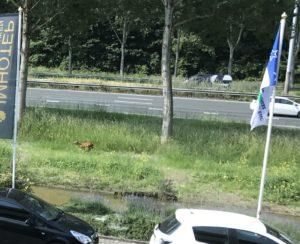 Ree Rijksweg A15, Mondial Movers